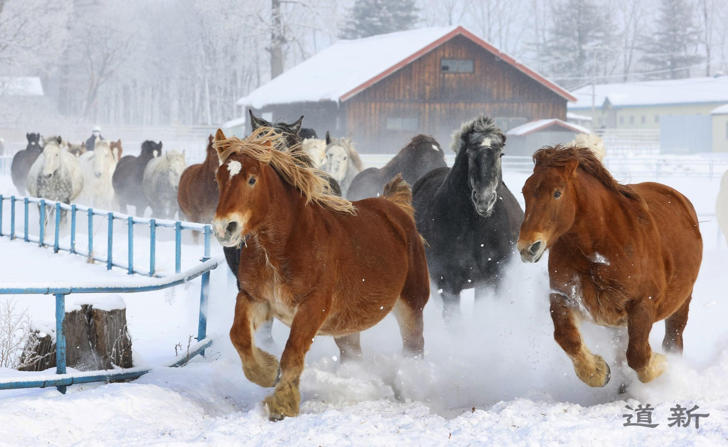 Photo:Snow whipped up by 87 sprinting horses